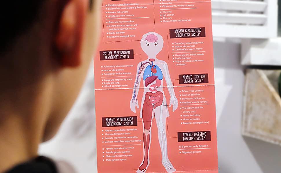 body cards realidad aumentada